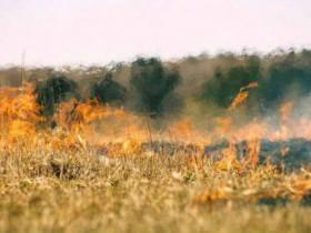 Владельцы территорий, прилегающих к лесу, обязаны обеспечивать ее очистку от сухой травы, мусора и других горючих материалов либо отделять лес противопожарным барьером